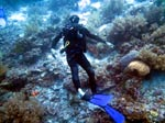 Scuba Diving Balicasag Island with SeaQuest Dive Center