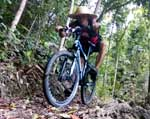 Solo Ride to the Sikatuna Tree Park