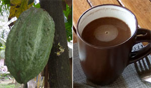 Making Sikwate: from cacao fruit to a hot dark chocolate drink