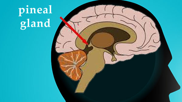 Dr. Joe Dispenza: Activating the Pineal Gland